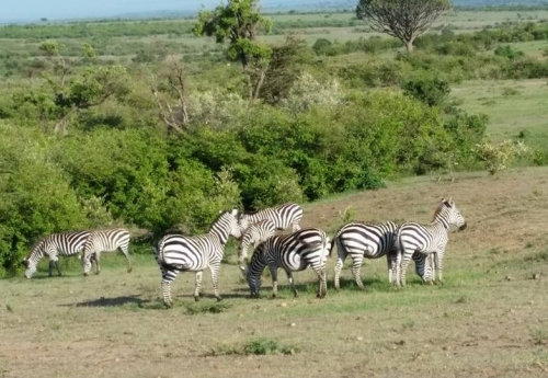 4 Days visit of lake Nakuru national park and Masai Mara national reserve